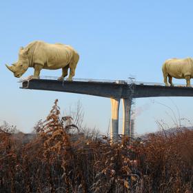 Dva nosorožci