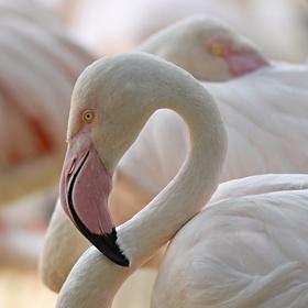 Máte rádi velký ptáky?
