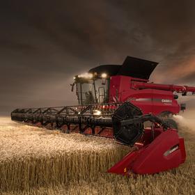 Noční lovec pšenice