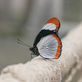 Křehká krása motýlích křídel