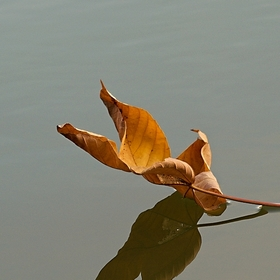 podzimní...