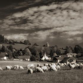 Ovečky a beránci