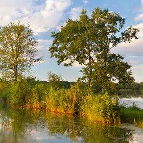 Sítinový rybník