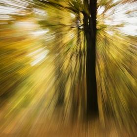 Podzimní abstrakce