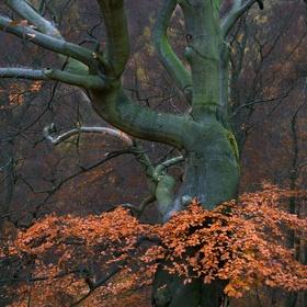 Podzim v Krušných Horách II