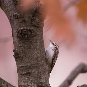 Šoupálek v podzimních barvách