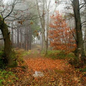 Podzimní cesta lesem.....