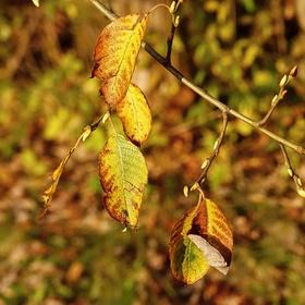 ..a je tu podzim...