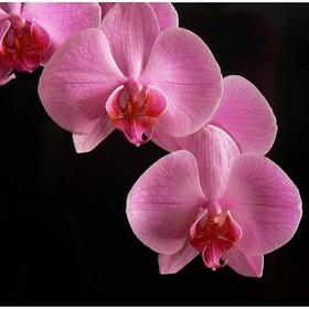 Když kvete orchidej