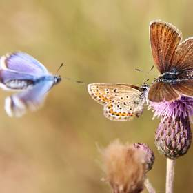 motýli 1
