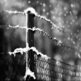 Ostnatý plot