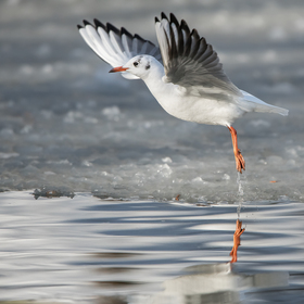Balet nad polozmrzlou hladinou