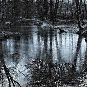 V Polanském lese