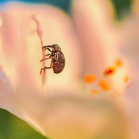 Pozdní odpoledne v květu