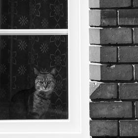 Rubikova kočka