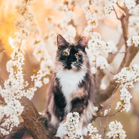 Jaro ve švestkovém sadu