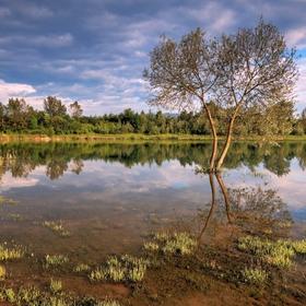 Vyliaty rybník