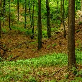 V lese se to zelená