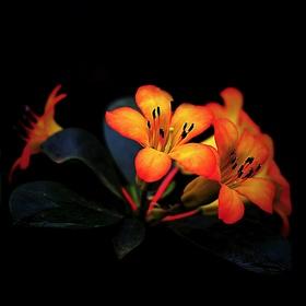 Květná abstrakce