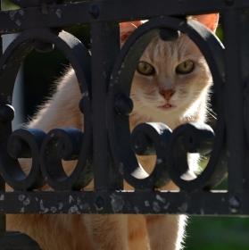 Kočka z Říma
