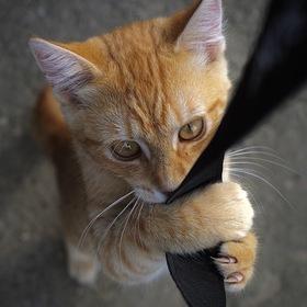 Kočka v parku