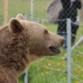 U výběhu medvědů