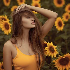 V zajetí slunečnic.