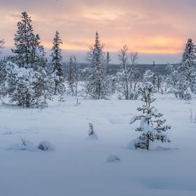 Švédská zima