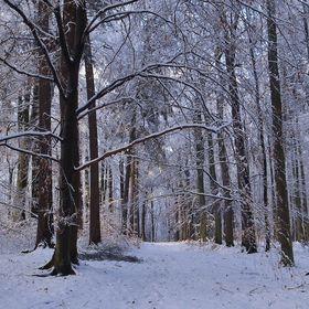 Na lesním chodníku