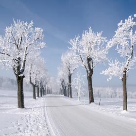 Zimní álejí