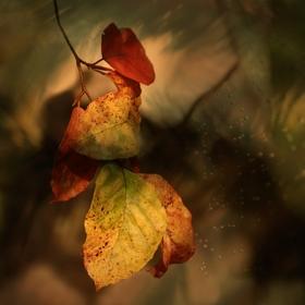 Roztančený podzim