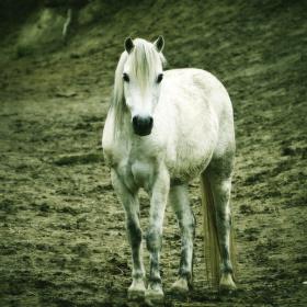 Prostě pěknej kůň