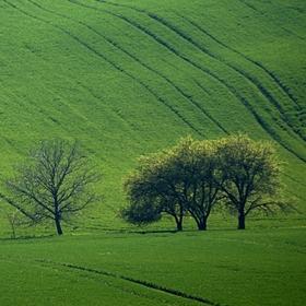zelené vlnění