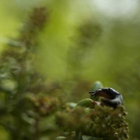 Slimák postrach zahrady