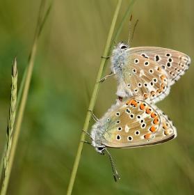 láska motýlí