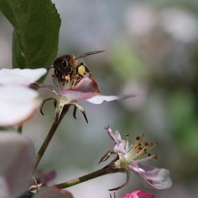 Včelí zastavení