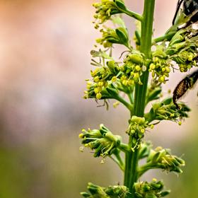 Včelí.