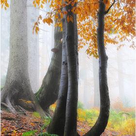Podzimní buk.