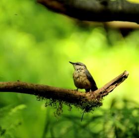 Pták sleduje komára