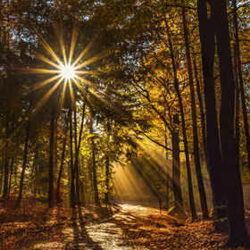prosluněný podzim