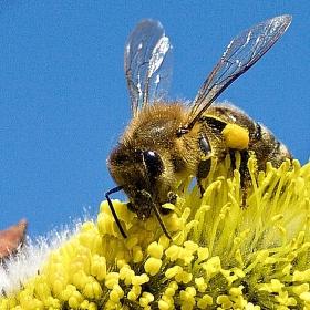Pracovitá včelka