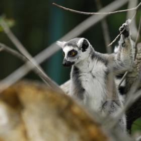 Nový výběh pro Lemury v Ústecké zoo