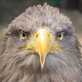 Orel - král ptactva