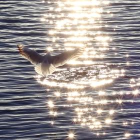 Letím za světlem