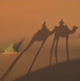 Velbloudi v poušti