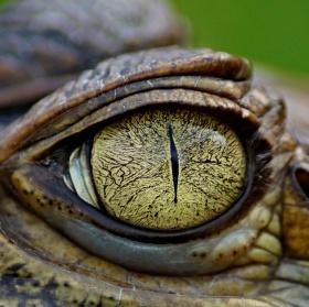 Oko Mordoru