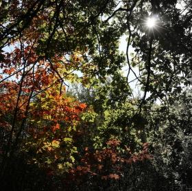 Podzimní scenérie