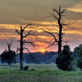 soumrak dubů