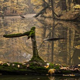 Lužní les XI - Přírodní rezervace Rezavka