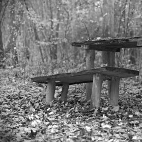 Posezení v lese